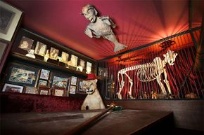 On the ceiling of the Viktor Wynd Museum of Curiosities, Fine Art & Natural History in London, is a Fijan Merman, which bears a strong resemblance to the Feejee Mermaid.