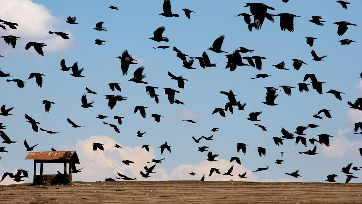 Not All Birds Fly South for Winter: Partial Migration Is on the Rise