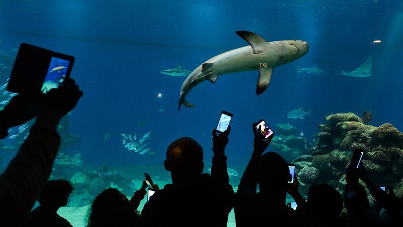 People watching shark at aquarium