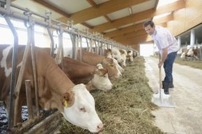 Livestock and crop types are variables that can significantly affect how many people a farm's yield can feed.