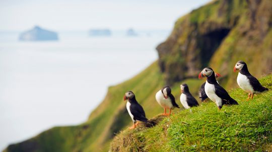 What's the difference between a penguin and a puffin?