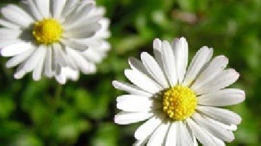 Perennials 12-24 Inches