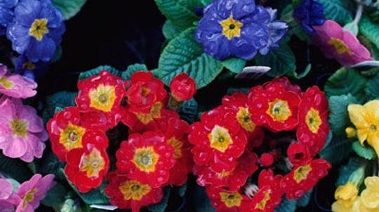 Perennials for Moist Soil