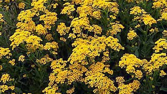 Perennials Under 12 Inches