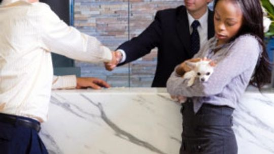 All About Pet Traveling Services