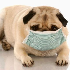 You aren't the only one with pet allergies -- you pet might also have them.