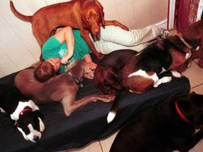 A worker at a pet boarding facility pals aroundwith the dogs.