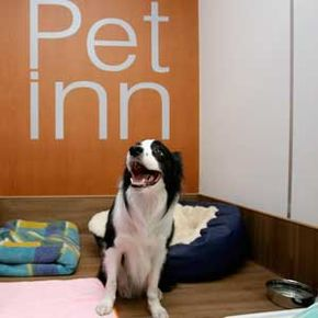 Adog ata pet hotel located at Narita International Airport inJapan