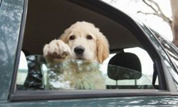 How can you make the ride easier for your pet? See more pet pictures.