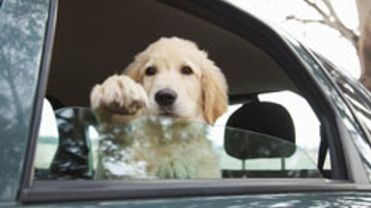 5 Amazing Pet Accessories for Cars