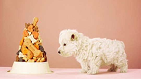 5 Tips for Budgeting Your Pet Care Costs
