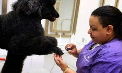 Pets get all kinds of pampering sessions at pet spas like this one, Chateau Poochie in Pompano Beach, Fla.