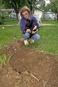 Some dogs have good reason to dig. Sweetie was buried alive after her family mistook her for dead when she was hit by a car. She dug herself out of her grave a few hours later. What's your dog's excuse?