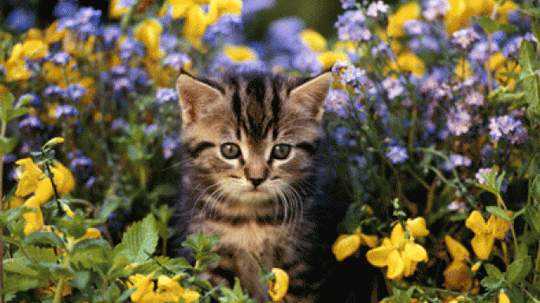 What's the most pet-friendly way to landscape?
