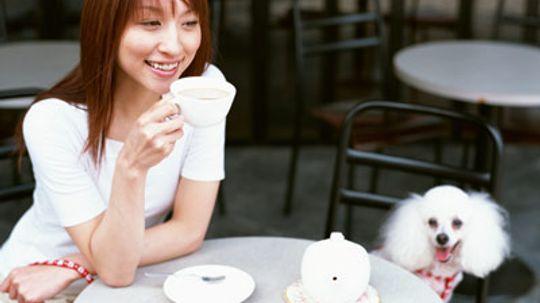 Pet-Friendly Restaurants Guide