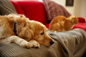 Despite your best efforts to keep your home clean, your pets will leave their mark. See more pet pictures.