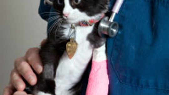 Pet Insurance Guide