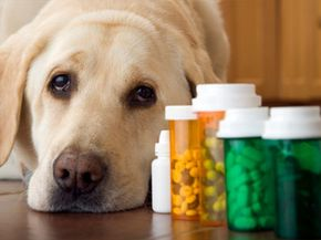 A few of those medications would make this dog's next road trip enjoyable, but be careful to follow directions. See more pet pictures.