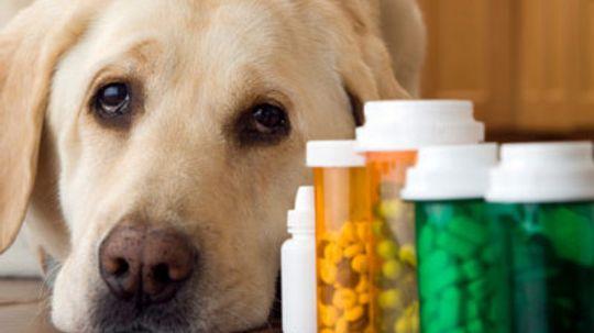 Pet Meds for Traveling Guide