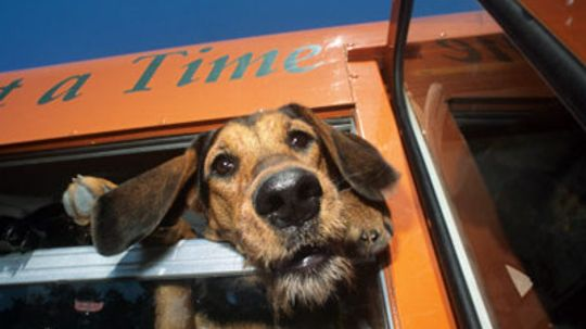 Can I take my pets on public transportation?
