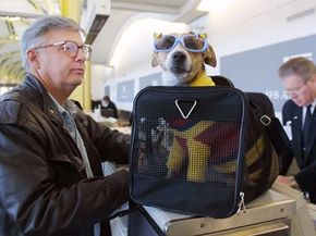 Dick the Dog prepares to fly to St. Petersburg Florida with his owner. Check out these pet pictures.