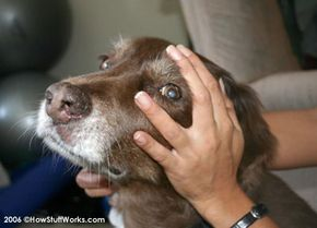 """A doggie mind meld: """"My mind to your mind. My thoughts to your thoughts."""""""