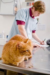 Before pets see the world, they'll need to see a vet.