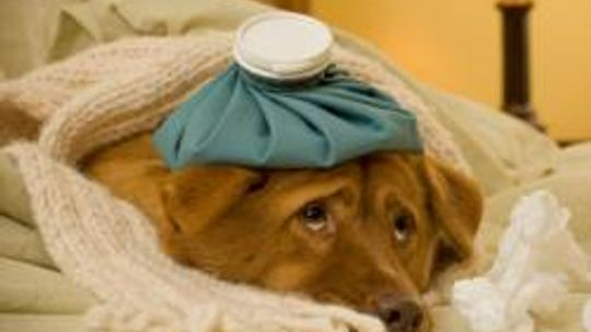 Medical Treatment for Dogs