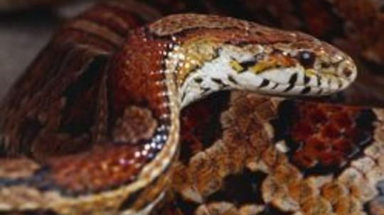 How to Get Rid of Mites on Snakes