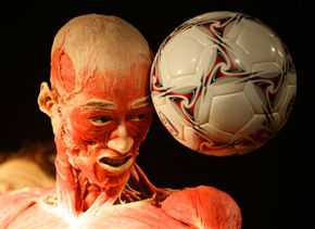 Without the preserving techniques and morbid insight into the human condition provided by early wunderkammern curators, exhibits like Body World (on display in Manchester, England in 2008), may not exist.