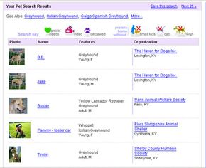 """Basic search results for """"greyhound"""""""