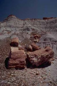 National Parks Image Gallery Layers of marsh sediment buried and transformed these petrified logs over millions of years. See more pictures of national parks.