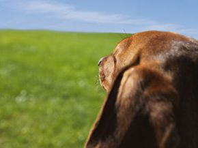 Pets are loyal friends thatget us to the parkfrequently.