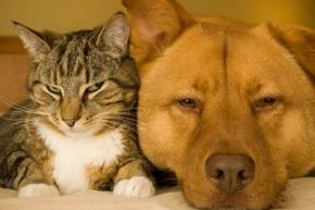 Both cats and dogs can cause allergies.