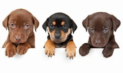 Puppies take more work, but can you resist those faces?