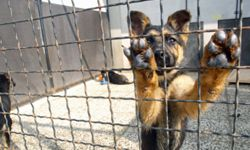 Don't let this guy stay in a cage; rescue him!