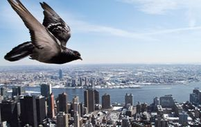 Carrier pigeons helped save hundreds of lives carrying important messages.
