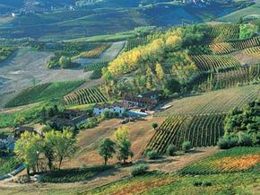 The Piedmont wine region of Italy is not just about producing spectacular boutique wines, but also about the entire gastronomic experience. See more wine pictures.
