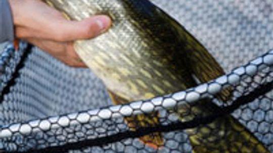 Top 3 Pike Fishing Techniques
