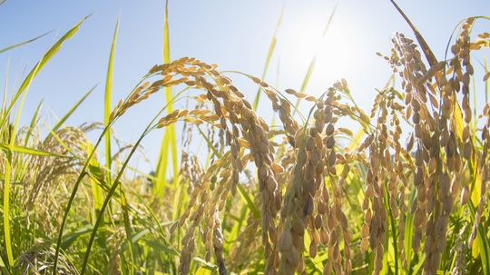 How Plant-microbial Fuel Cells Work