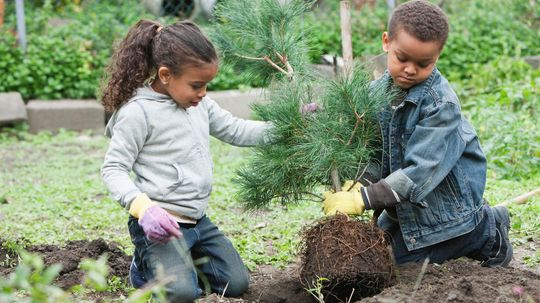 How to Plant a Pine Tree