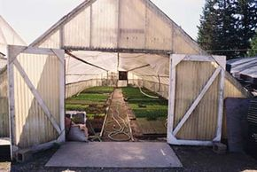 Mimic the conditions of a greenhouse with a homemade mini-greenhouse.