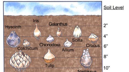Planting Bulbs