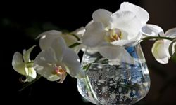 Keep your lifestyle in mind as you search for the perfect houseplant. See more perennial flower pictures.