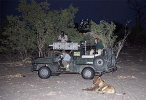 This crew gets a close-up view of an uninterested African lion.