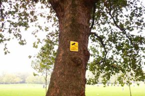 This tree in a park has a note on it warning of a security camera.