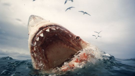 Can playing dead help save me from a shark attack?