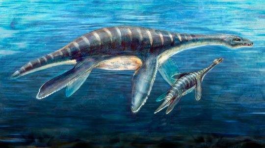New Study Sheds Light on How Plesiosaurs Used Their Flippers to Swim