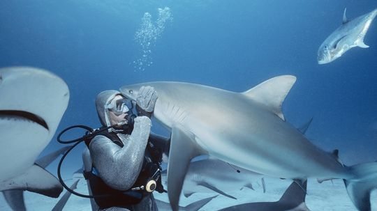 Can I Survive a Shark Attack by Gouging Out Its Eyes?
