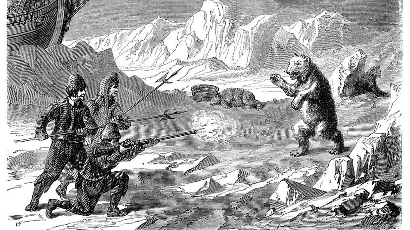1878 engraving polar bear attack